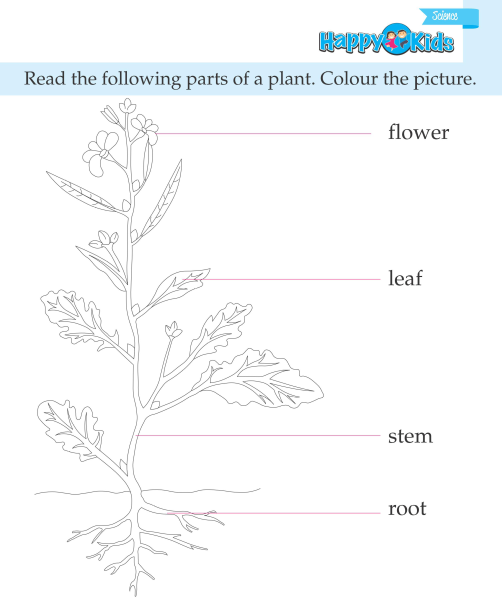 LKG Science Book_Page_13