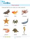 Kindergarten Science Water Animals