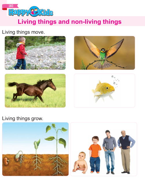 Kindergarten Science Living And Non-living Things