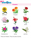 Kindergarten Science flowers