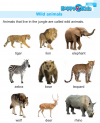 Kindergarten Science Wild Animals