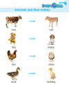 Kindergarten Science Animals And Their Babies