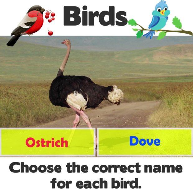 Names of Birds - Kindergarten Science